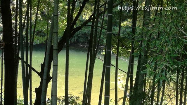 竹やぶと土岐川