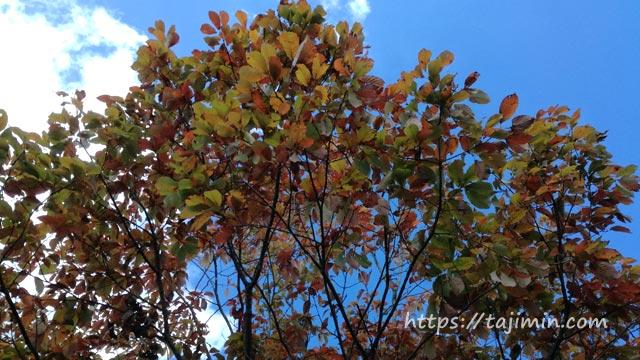 共栄公園の木