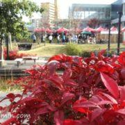 紅葉の虎渓用水広場