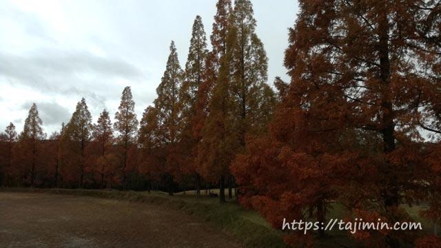 脇之島中央公園グラウンド