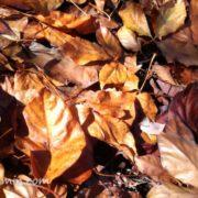セラミックパークMINOの落ち葉