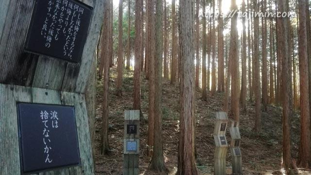 潮見の森、こころの小径