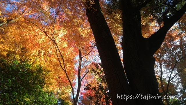 愛知県犬山市 寂光院の紅葉