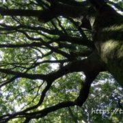 高社神社の木
