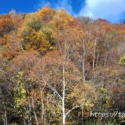 長野県松本市の紅葉