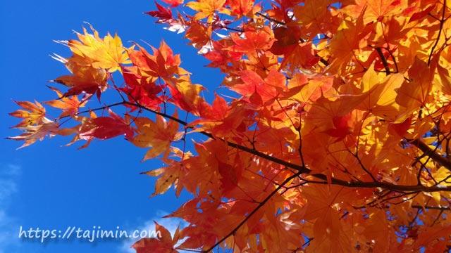 平湯の紅葉
