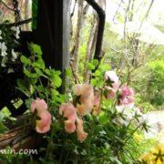 花フェスタ記念公園(可児市)、ターシャの庭