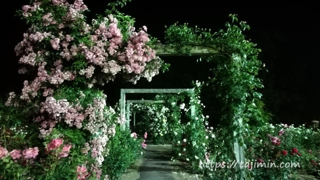 花フェスタ記念公園のナイトローズガーデン