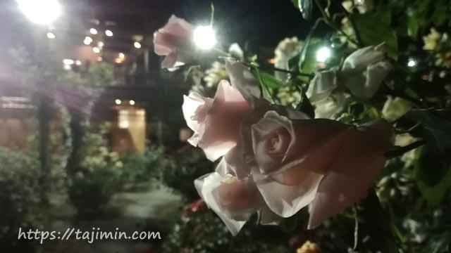 花フェスタ記念公園ナイトローズガーデン