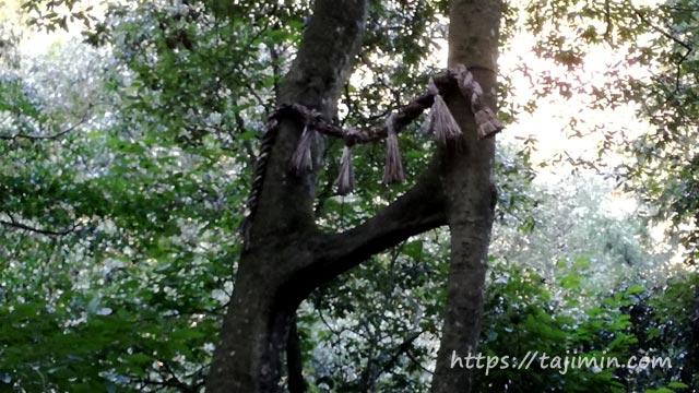えびす滝横の縁結びの樫