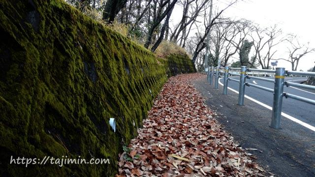 桜並木への道