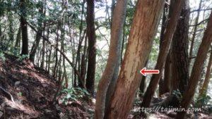 春の高社山登山、イノシシの痕跡