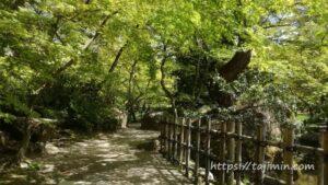 新緑の曽木公園