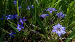 竜吟の滝のに咲く花7